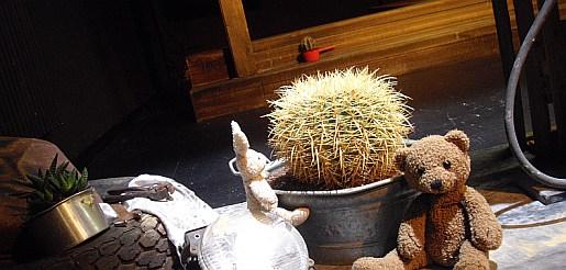 kaktus gemeinsam